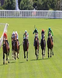 Horse Racing Betting Tips tips / strategy